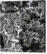 Lichen Like Canvas Print