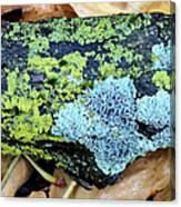 Lichen On Fallen Branch Canvas Print