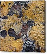 Lichen Pattern Series - 10 Canvas Print