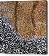 Lichen Pattern Series - 11 Canvas Print