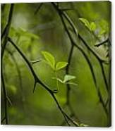 Life And Thorns Canvas Print