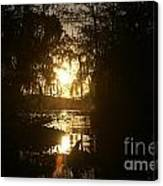 Light In Gold Canvas Print