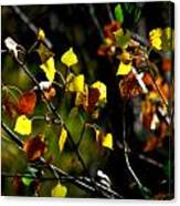 Light On The Leaves Canvas Print