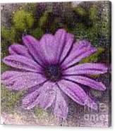 Light Purple Daisy Canvas Print