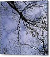 Lightening Branches Canvas Print