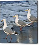 Lighthearted Seagulls Canvas Print