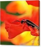 Lightning Bug On Gladiolus Canvas Print