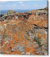 Likin' The Lichen Canvas Print