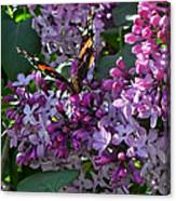 Lilac Butterfly Canvas Print