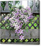 Lilac Clematis Flower Vine Basking In Sun Rays On A Wood Garden Arbour Canvas Print