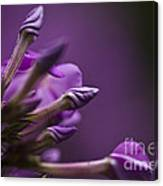 Lilac Spirals. Canvas Print