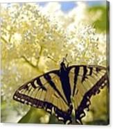 Swallowtail Lilac Spring Photo Canvas Print
