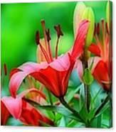 Lilies Ascending Canvas Print