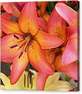 Lilies Background Canvas Print