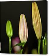 Lilies In A Row Canvas Print