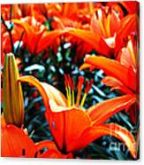 Lilies In Bloom Canvas Print