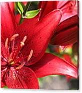 Lilies In Red Canvas Print