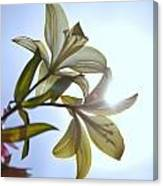 Lilies In The Sun Canvas Print
