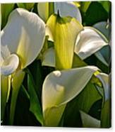 Lilies Of The Nile Canvas Print