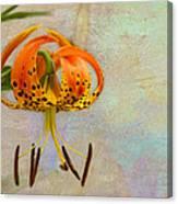 Lilium Pardalinum Canvas Print