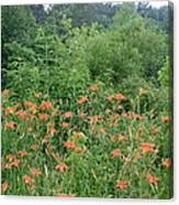 Lillies In The Valley Canvas Print