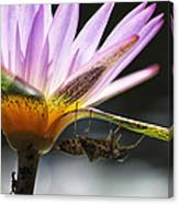 Lilly Visitor Canvas Print