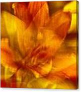 Lily Abstract Canvas Print