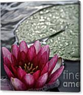 Lily And Pad Canvas Print
