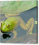 Lily Frog Canvas Print