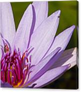 Lily Life Canvas Print