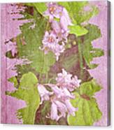 Lily Of The Valley - In The Pink #3 Canvas Print