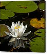 Lily On The Pond Canvas Print