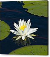 Lily Pad And Flower Canvas Print