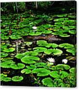 Lily Pad Turtle Camo Canvas Print
