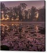 Lily Pads In The Fog Canvas Print