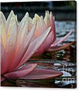Lily Sisters Canvas Print