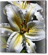 Lily Sweet Lily Canvas Print