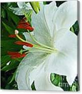 Lily Thuya Garden Me Canvas Print