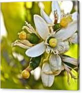 Lime Blooms And Fruit Canvas Print