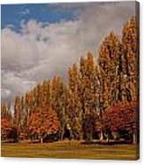 Line Of Trees Canvas Print