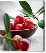 Lingonberries Canvas Print