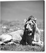 Lion King In Black And White Canvas Print