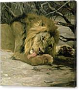 Lion Reclining In A Landscape Canvas Print
