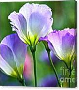 Lisianthus Number 6 Canvas Print