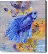 Little Blue Betta Fish Canvas Print