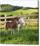 Little Horses At Pasture Canvas Print