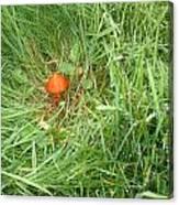 Little Orange Mushroom Canvas Print