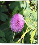 Little Purple Bloom Canvas Print