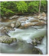 Little River Rapids Canvas Print
