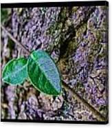 Little Vine Canvas Print